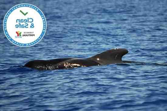 Reinício da atividade turística na Madeira a partir de outubro.