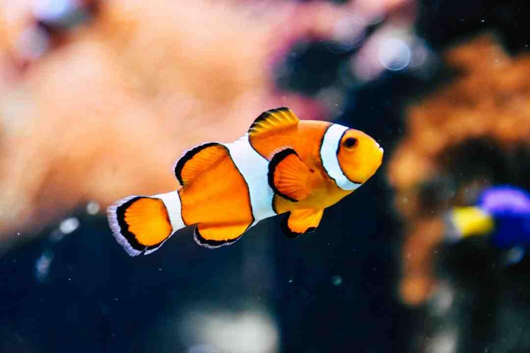 Quando o peixe começa a perder a cor?