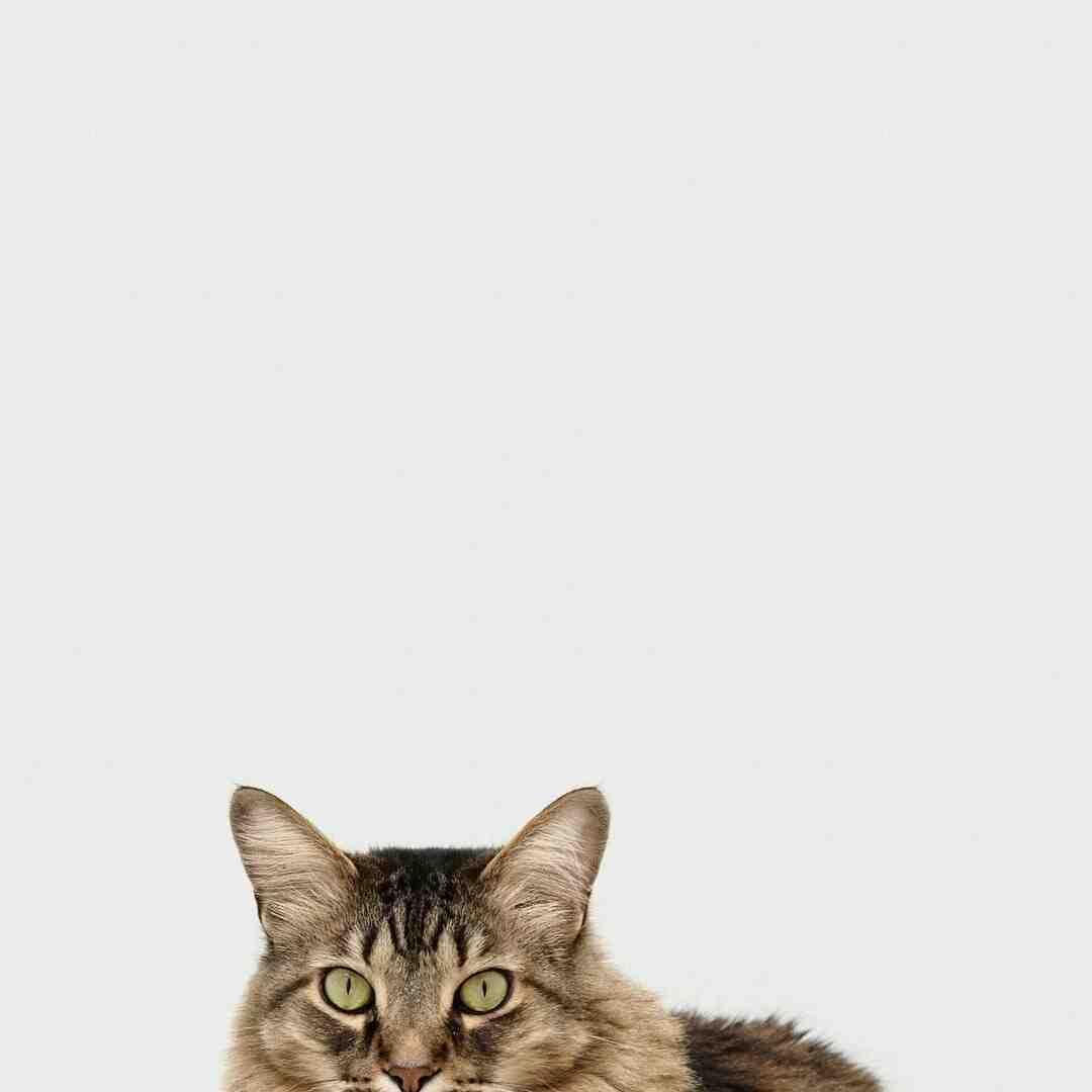 Quando os filhotes de gato começam a mexer na barriga?