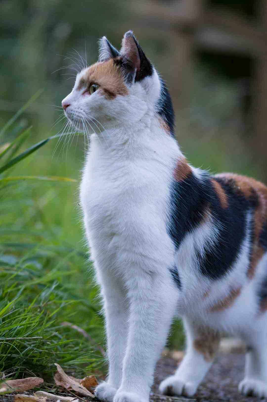 Quantos filhotes nascem de uma gata persa?