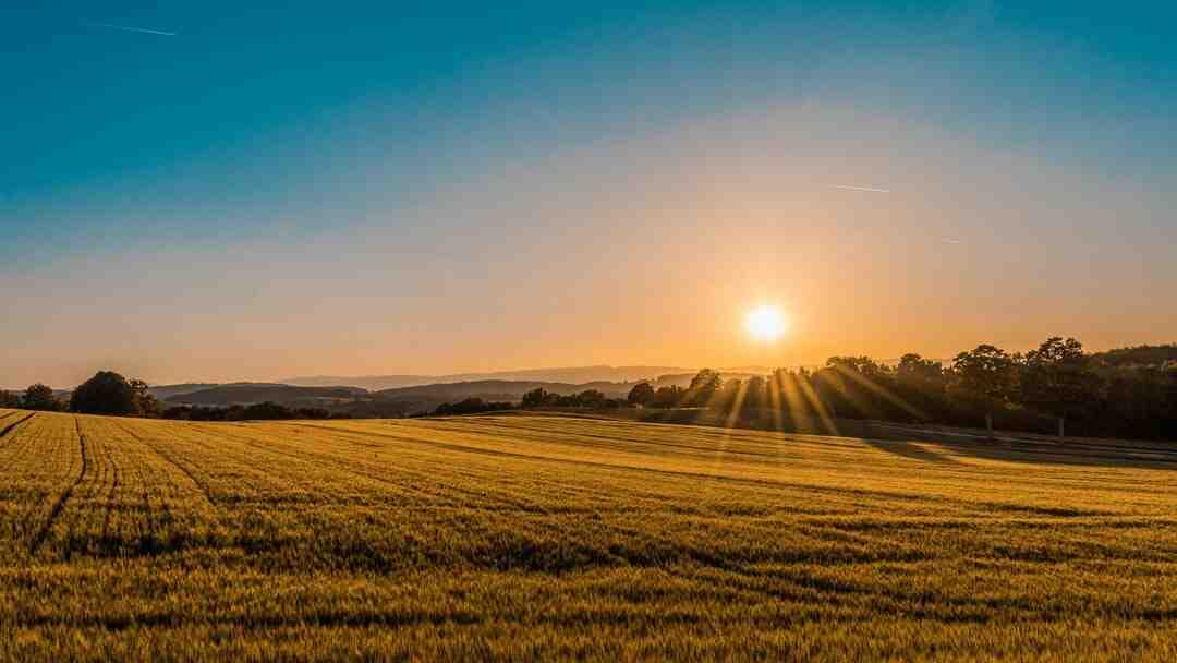 Qual é o lucro de uma granja?